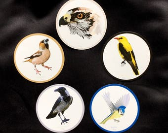5 Fridge Magnets_set2 Bird print high quality paper