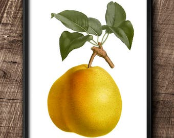 Pear · Instant Download · Fruit · Vintage · Wall · Printable · Digital File #77