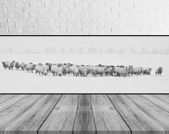 Winter Print, Snow Photography, Sheep, Black-White Photo, Wall Art, Printable Poster, Digital Download, JPG