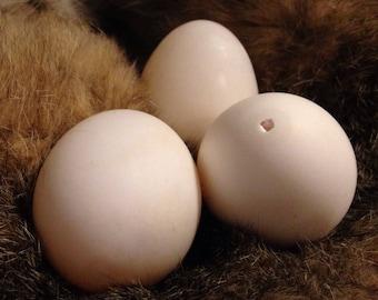 Pasture Raised Hollow Duck Eggs