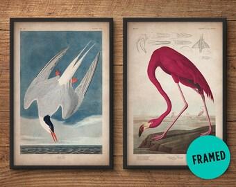 Audubon birds, Framed print set, Flamingo print, Tern print, Audubon print, Birds of America, John James Audubon, Framed print, Wall art