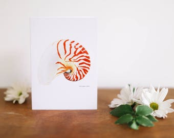 Nautilus Shell Greeting Card and Note Card