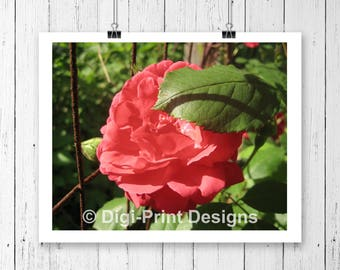 Red Rose Photography Print, Art Print, Home Decor, Rose Print Photo, Country Decor, Botanical Print Art Poster, Printed Art Rose Kitchen Art