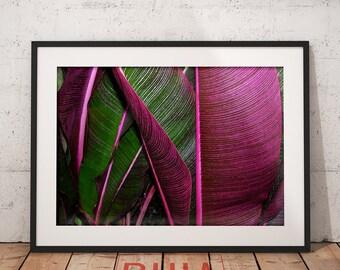 Pink Leaves Print, Housewarming Gift, Botanical Print, Tropical Decor, Leaf Wall Art Print, Nature, Printables  #LeavesCollection Nº1