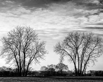 Two trees - a black and white photographic print , Monochrome tree photograph, Silhouetted trees, Black and white photographic print