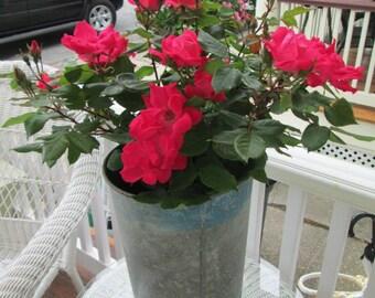 Vintage French zinc florist bucket