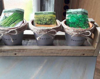 Windowsill Kitchen Herb Garden - Grow your own Kitchen garden
