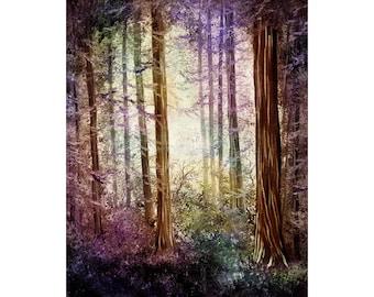 Morning Colors On The Redwoods Wall Art Landscape Redwood Trees Home Decor Santa Cruz Print Zen Spiritual Nature Giclee Canvas or Paper