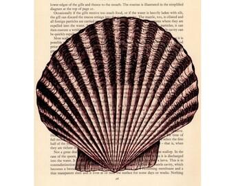 Scallop Seashell Art Print Nature Ocean Sea Nautical Reproduction  Art Home Decor Wall Art Hanging Graphic Arts llustration