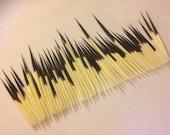 50 Porcupine Quills - Last Set
