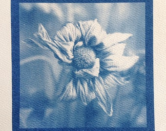 Dead Flower, Real Cyanotype Print, OOAK Ready to Frame, one of a kind handmade cyanotype print