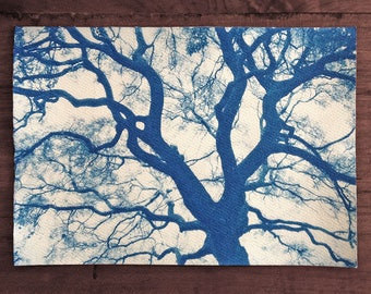 Outspread Tree Branches, Real Cyanotype Print, OOAK Ready to Frame, one of a kind handmade cyanotype print