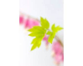 Bleeding Heart Photograph, Floral Art Print, Pink Chartreuse Wall Decor, Flower Photography