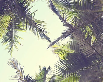 Palm tree photography, coastal decor, tropical decor, green, summer wall art, coastal wall art, palm tree wall art - This is Bliss