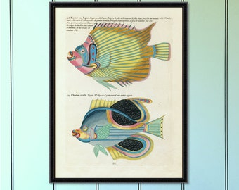 Tropical Fish Serious (No.3) Antique Reproduction Print  antique fish print coastal decor art home decor antique print tropical decor giclee
