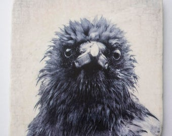 Frazzled Crow Tile - Dishevelled Crow Portrait by June Hunter on Hanging Marble Tile or Coaster - Bird Lover Gift