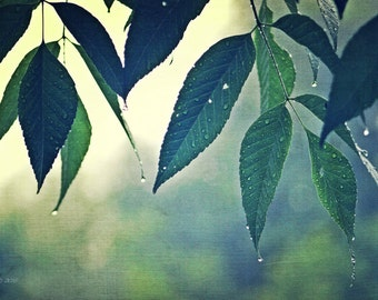 """Nature Photography, Leaves, Rain, Blue, Green, Rustic, Woodland, Forest, Wilderness, Storm, 6x9 or 8x12. """"Quenched""""."""