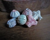 Artisan made ceramic beads - Beach Combing - artist beads - set of 6 - Urchins, coral and sponge