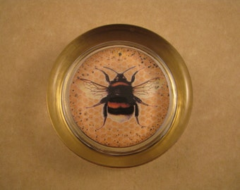 Gold and Black Bee Two Round Glass Paperweight Bee Insect Lover