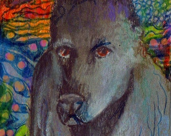 original art  aceo drawing poodle non sporting group westminster