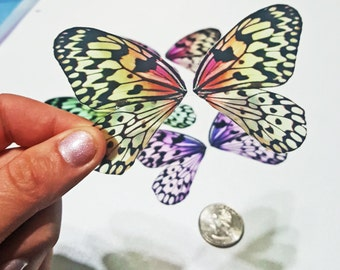 Large Dragonfly Wings Transparency Cut Outs