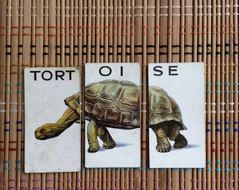 Chimera Tortoise:  Pictorial Trio of Vintage Cigarette Cards, R