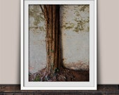 Strong Roots Tree of Life Nature Photographic Art Print