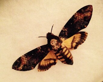 Death Head Moth, Silence of the Lambs, Glass Riker box display case, Insect, Bug, Oddity, Curiosity