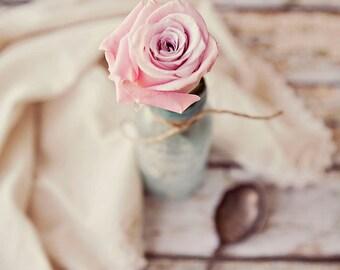 Pink Rose 4 ~ 8x10 photo print