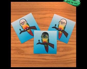 Conure Color Mutations, set of 3, 4X4 mini prints