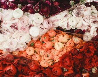 Flowers Pics, Images of Flowers, Flower Art, Flower Print Images, Flower Art Photography, Floral Print, Ranunculus Photo Print