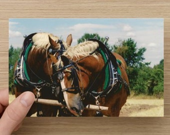 Horse Photography Draft Horses at Rest - Fall on the farm Animal Photography on Blank Note Card Horse Photo All Occasion Card
