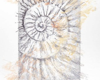 Original ammonite fossil zinc etching no.67 with chine colle jurassic Dorset coast fossil spiral fossil ammonites golden section