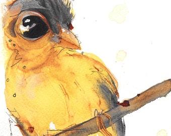 12 x 12 Bird Art, Goldfinch, Bird Art Print