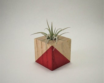 Air Plant Holder + Tiny Air Plant | Red Wood Air Planter - Plant Hostess Gift - Air Plant Favor - Air Planter - Plant Desk Decor | TAP-3
