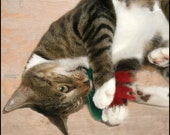 StinkBugs Valerian Root & Organic Catnip Cat Toy - Bah Humbugs - Christmas Edition - Hand Knit Felted Wool - No polyfil, Pure Herb Stuffing