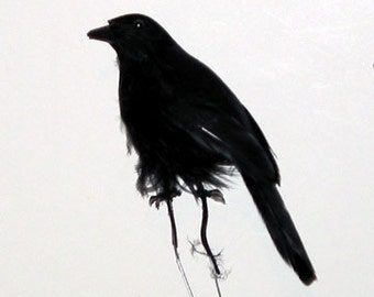 6 pc 4 Inch Feather Crow (J.D), Black Halloween Crows, Party Decoration, Costume or Hat Accents