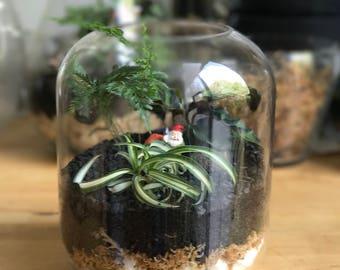Gnome Rainforest terrarium