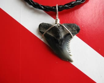 "Shark Tooth Necklace, ""Snaggletooth"" Shark, Fossil Shark tooth, Venice-Florida, Braided leather cord, Silver plated wire wrap"