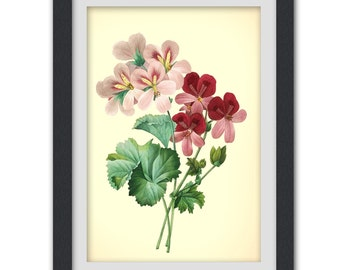 Botanical Print, Redoute art, Floral Printable pink flower, 8x11 botanical art print from a vintage book plate. #INSTANT DOWNLOAD 56