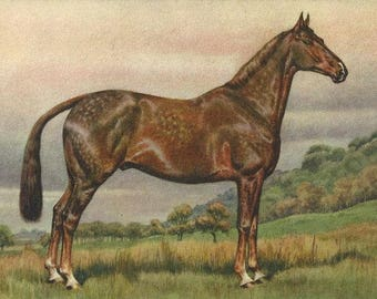 Seal Dappled - Vintage 1940s Artist-signed Lithographic Horse Postcard