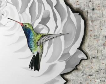 "Hummingbird- 5""x7"" Unframed Art Print by Jamie Rice-Desk art,  Wall decor"