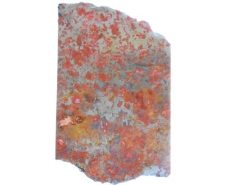 "Orby Orange Orbicular ""Blue Poppy"" Mystery Jasper Slab #2563"