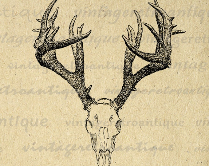 Printable Deer Skull Graphic Deer Digital Image Antlers Illustration Download Image Antique Vintage Clip Art Jpg Png Eps HQ 300dpi No.1248