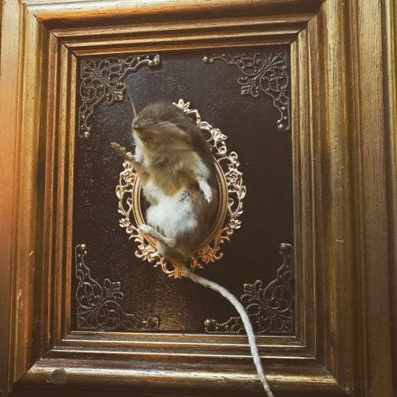 Taxidermy Mouse in Gold Frame