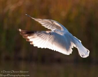 Seagull Art Bird photography Coastal Decor Fine Art Nature Photography 11x14 8x10