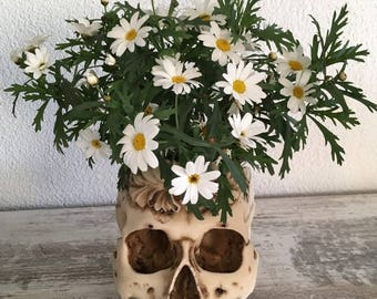 Human skull plant pot decoration