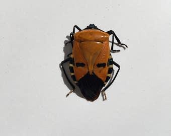 Man-Faced Beetle // Dried Beetle // Real Beetle // Taxidermy Beetles
