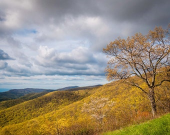 Early spring view of the Blue Ridge Mountains in Shenandoah National Park, Virginia.   Photo Print, Stretched Canvas, or Metal Print.