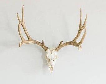 Faux Deer Antler Set, Reproduction Antler Mount, Mule Deer